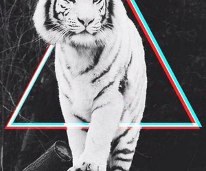 tiger, animal, and triangle image