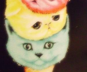cat and ice cream image