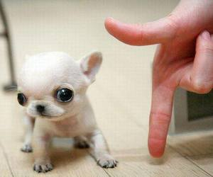 dog, puppy, and little image