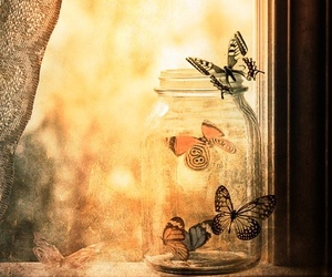 butterfly, beautiful, and photography image