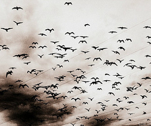bird, fly, and freedom image