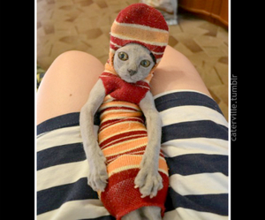 cats, cat sock, and lol image