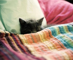 adorable, blanket, and bed image