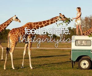 giraffe, animal, and safari image