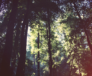 america, california, and forest image