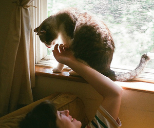 cat and indie image