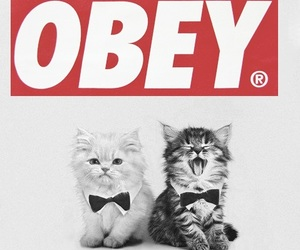 obey and kittten image
