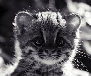 kittie, pet, and cute image