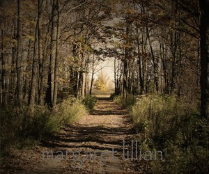 autumn, road, and walk image