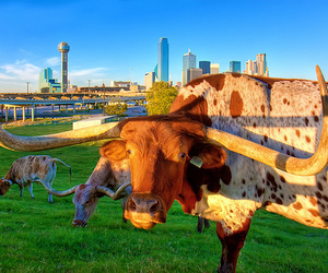 animals, Dallas, and photography image