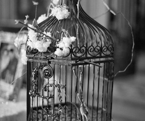 black, grey, and cage image