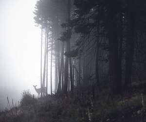 fog, deer, and forest image