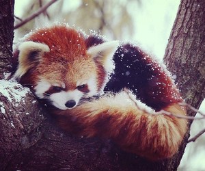 cute, snow, and animal image