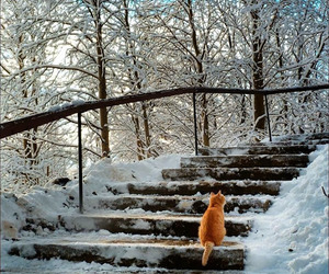 cat, photography, and snow image