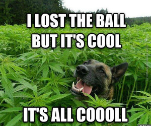 dog, funny, and weed image