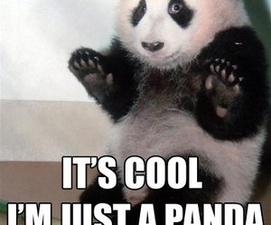 panda, funny, and cool image