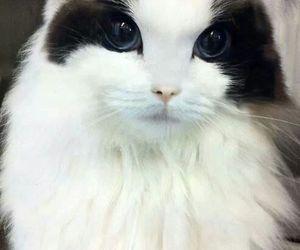 awesome, blue, and eyes image