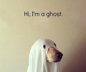 cute, dog, and ghost image