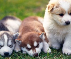 dogs, puppies, and cute image