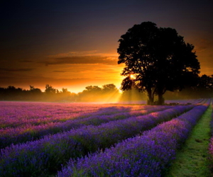 sunset, nature, and france image