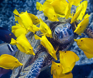 fish, turtle, and yellow image
