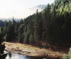everything, forest, and free image