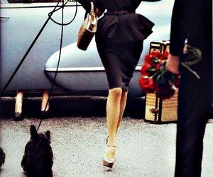 fashion, dog, and black image