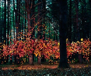 leaves, autumn, and forest image