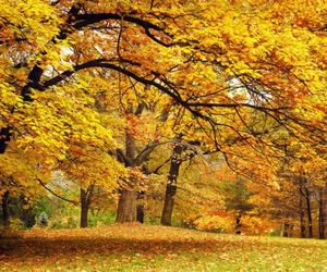 autumn, forest, and lawn image
