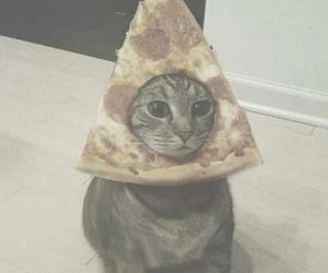 cat, funny, and pizza image