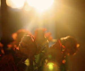 beauty, bokeh, and flare image