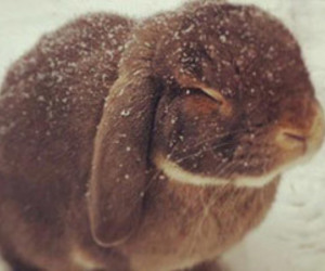 cute, bunny, and snow image