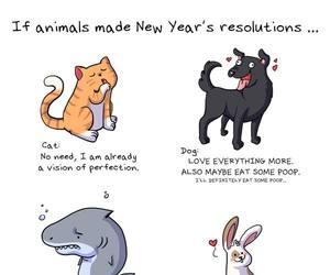 animal, funny, and new year image