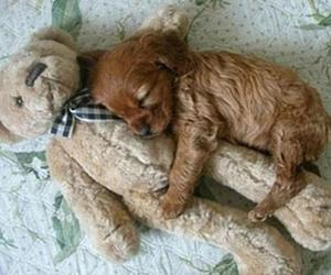 adorable, sleep, and cuddle image