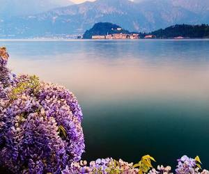 italy, nature, and flowers image