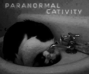 cat, paranormal, and funny image