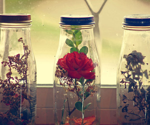 flowers, quotes, and glass image