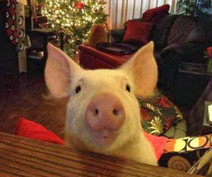 christmas, pig, and cute image