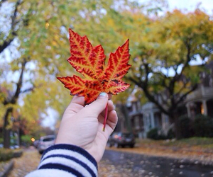 autumn, tumblr, and leaves image