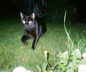 cat, indie, and night image