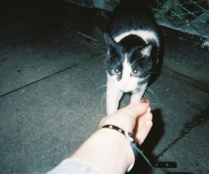 cat, grunge, and indie image