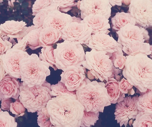 flowers, retro, and pink image