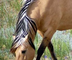 horse and animals image