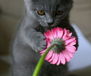 all, cat, and flower image