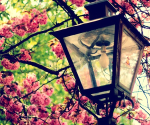 flowers, pink, and light image