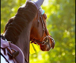 horse, brown, and summer image