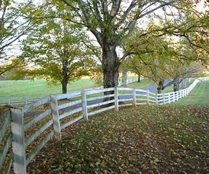 autumn, drive, and fence image