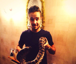 liam payne, one direction, and snake image