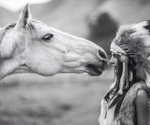 animal, horse, and black and white image