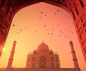 india, taj mahal, and bird image